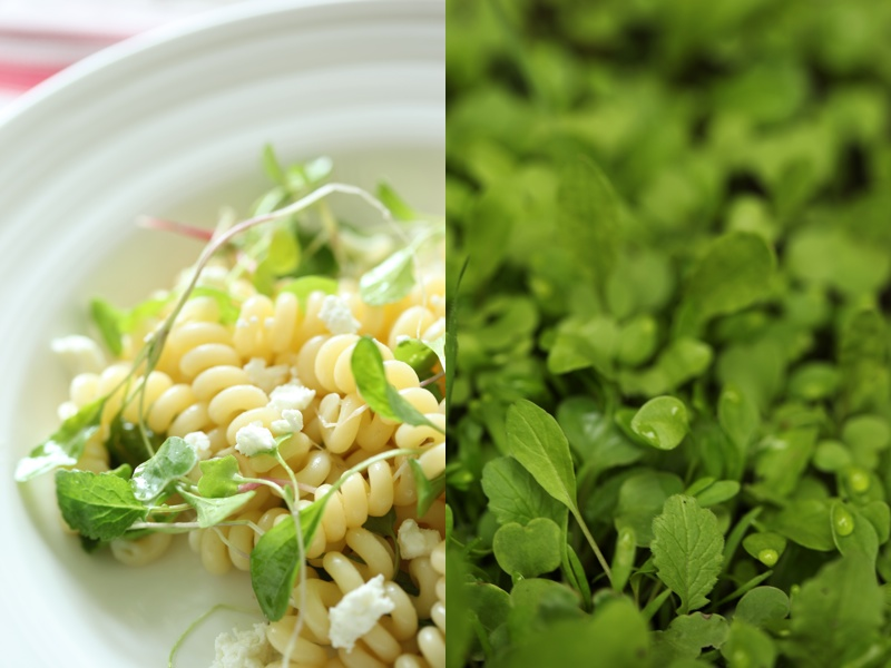 Spring Thinnings Pasta