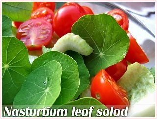 Jeanne Wild Nasturtium leaf salad